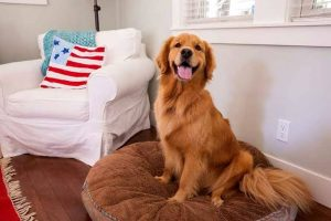 Ways To Keep Your House Clean In Los Angeles With Dogs At Home
