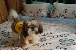 How to Remove Pet Hair from Upholstery by House Cleaning Sacramento