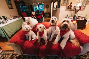 House Cleaning Tips on Pet Dander Cleanup